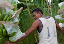 Lidl : des fruits moins chers mais au prix de vies humaines