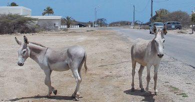 """Les ânes d'Afrique sacrifiés sur l'autel de la """"médecine"""" chinoise"""