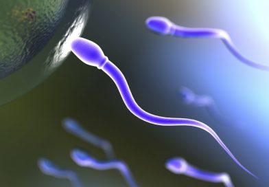 La fertilité masculine en péril du fait de la pollution environnementale