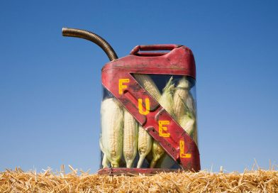 Les biocarburants en Afrique : état des lieux